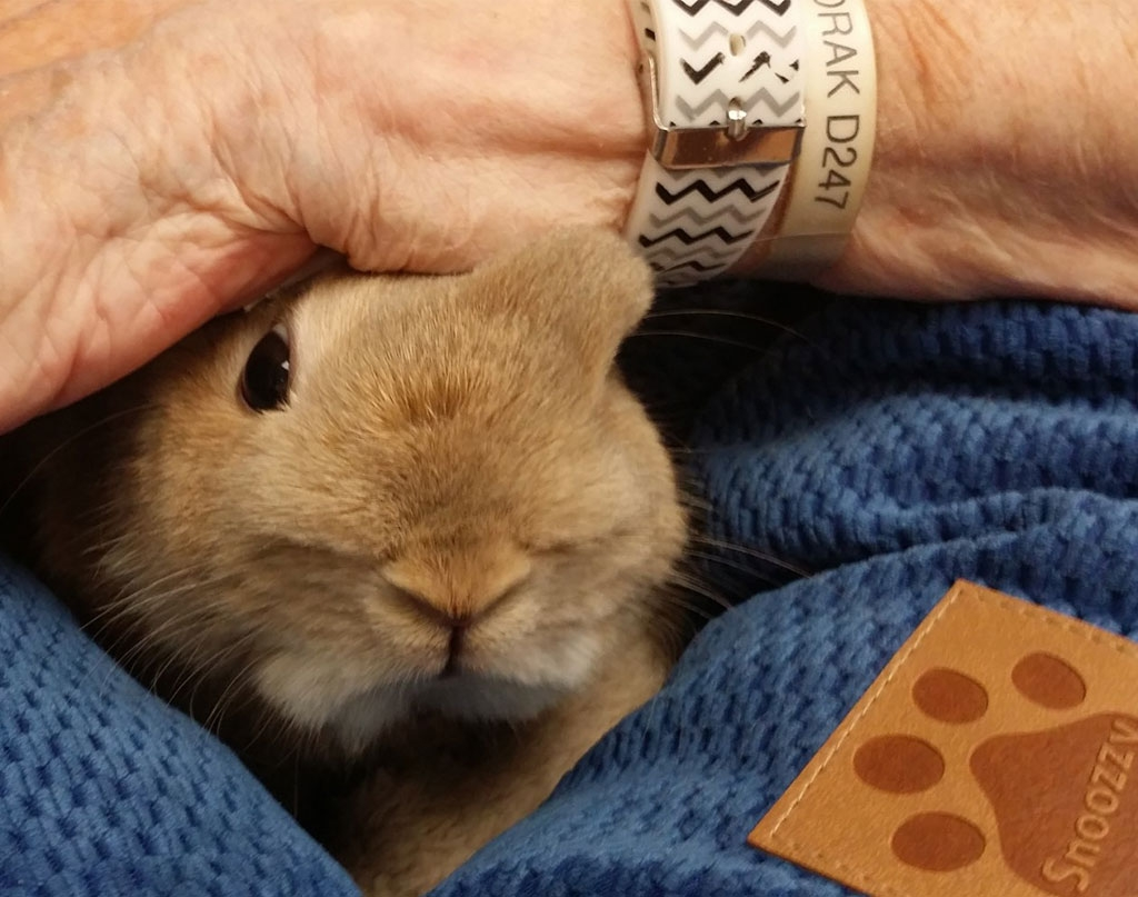 """Calm . . . Satisfied . . . Comforting"": The Experience and Meaning of Rabbit-Assisted Activities for Older Adults"