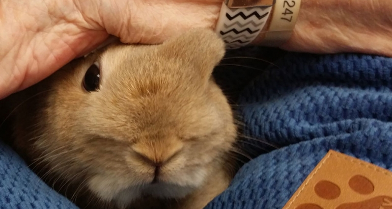 """""""Calm . . . Satisfied . . . Comforting"""": The Experience and Meaning of Rabbit-Assisted Activities for Older Adults"""